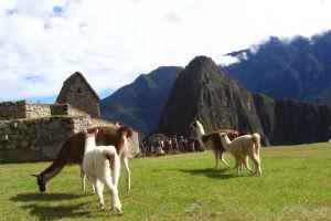 Jobba i Peru
