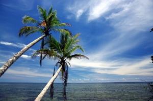 Hitta arbete i Karibien