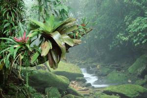 Volontärjobba i Centralamerika